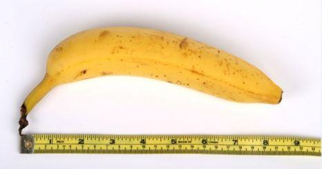 penis-measure