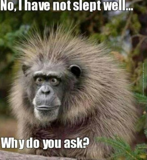funny-pics-monkey-had-a-bad-sleep