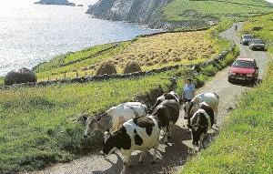 irish traffic jam